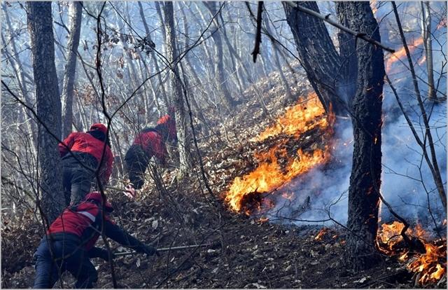 12일 강원 삼척시 산불진화대원들이 도계읍 황조리 산불 현장에서 진화작업을 하고 있다 ⓒ연합뉴스