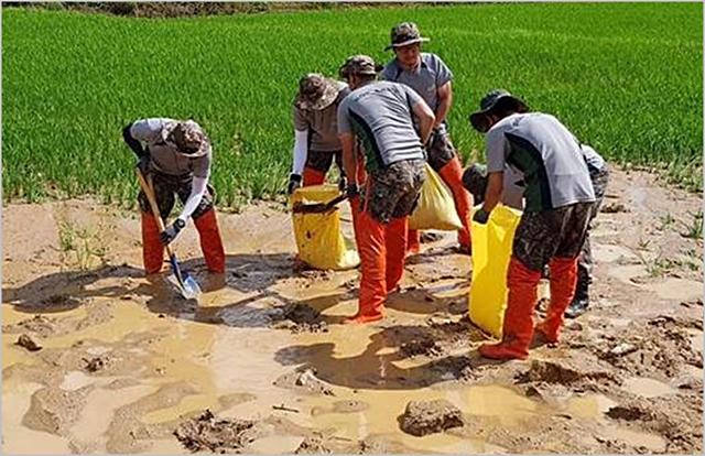 육군 35사단 장병들이 이달 초 집중호우 피해를 입은 전라북도 남원시 보절면 일대에서 경작지로 유입된 토사를 제거하고 있다. ⓒ국방부
