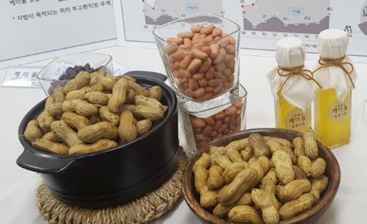 심혈관 질환에 효과가 확인된 농진청 개발 땅콩품종과 땅콩기름. ⓒ데일리안