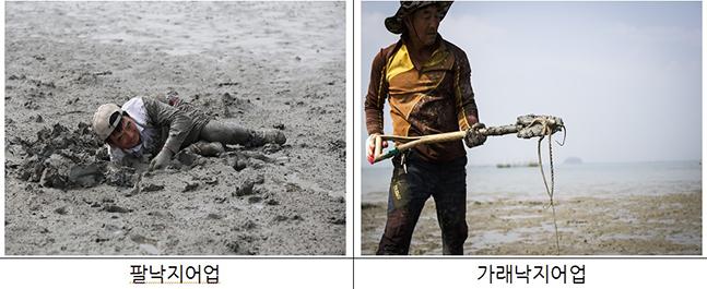 국가중요어업유산으로 지정된 무안·신안 갯벌낙지 맨손어업 ⓒ해수부