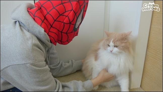 집사와 고양이. 크림히어로즈 유튜브 캡처