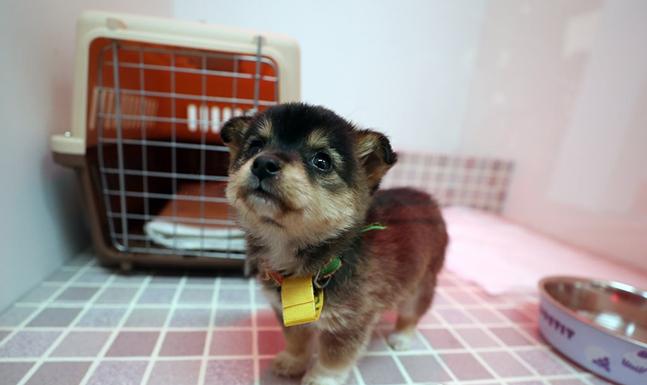 유기동물 입양카페에서 유기 강아지가 새로운 가족을 기다리고 있다. ⓒ연합뉴스