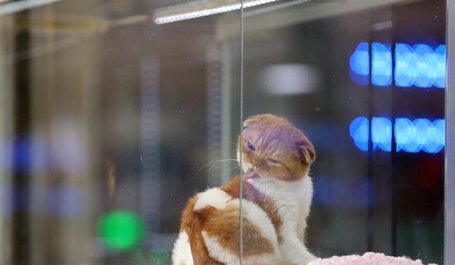 한 애완동물 가게에서 고양이가 분양을 기다리고 있다. ⓒ연합뉴스