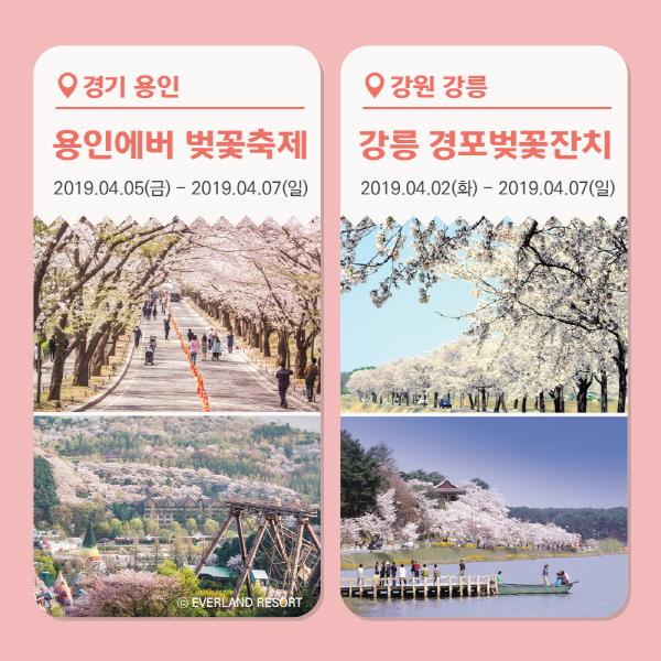 [카드뉴스] 4월 벚꽃놀이 언제 어디로 갈까?