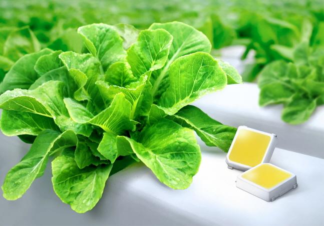 삼성전자 식물 생장용 백색 LED.ⓒ삼성전자