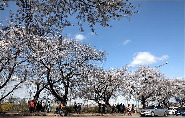 서울 여의도 국회 인근 도로에 핀 벚꽃 너머로 오랜만에 만나는 미세먼지 없는 파란 하늘이 보이고 있다.(자료사진) ⓒ데일리안 박항구 기자