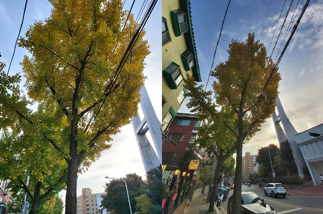 삼성전자 '갤럭시A90 5G'으로 촬영한 광각(왼쪽), 초광각 이미지.ⓒ데일리안 김은경 기자