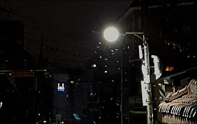 지난 11월 19일 오전 서울 관악구 미성동 주택가 골목 가로등 불빛 사이로 첫 눈이 살포시 내리고 있다.ⓒ데일리안 박항구 기자