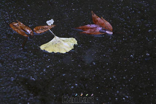 겨울비가 내린 17일 오전 서울 중구 정동에서 낙엽이 빗물과 함께 바닥에 고여 있다. ⓒ데일리안 홍금표 기자