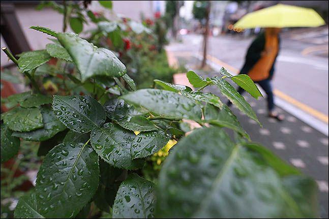 내일인 11일엔 전국이 대체로 맑다가 늦은 오후부터 차차 흐려져 전남 해안과 제주도에는 밤에 비가 내리겠다.(자료사진)ⓒ데일리안 류영주 기자