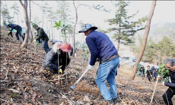 작년 2월 21일 전남 장흥에서 황칠나무를 식재하고 있다. ⓒ산림청