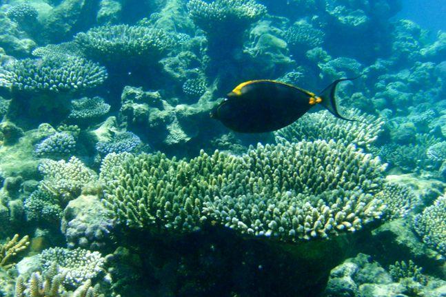 몰디브의 엠부두 섬 수중 산호초 사이로 물고기 한마리가 먹이를 찾고 있다.ⓒ신화/뉴시스
