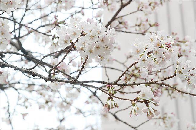 일요일인 22일 전국이 대체로 맑고 포근한 봄 날씨를 보이겠다.ⓒ데일리안 류영주 기자
