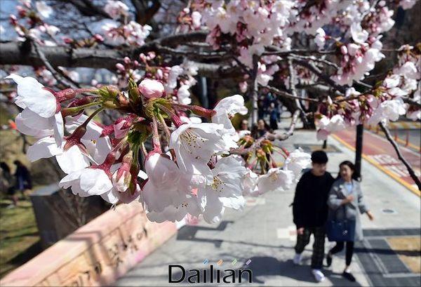 벚꽃이 피어난 길을 시민들이 지나고 있다(자료사진). ⓒ데일리안 홍금표 기자