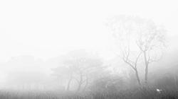 안개 가득한 경상북도 수목원 '기묘한 풍경'