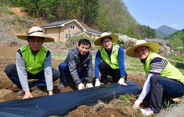 NH농협은행, 경기 양평 신당마을서 농촌 일손돕기 실시