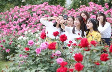 '화려한 꽃의 향연' 에버랜드 장미축제, 내달 17일까지