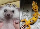 '고슴도치, 도마뱀까지' 유튜브 점령한 반려동물들
