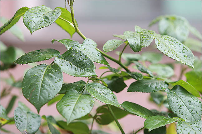 [오늘날씨] 현충일 날씨 맑다가 밤부터 비…7일부터 그쳐