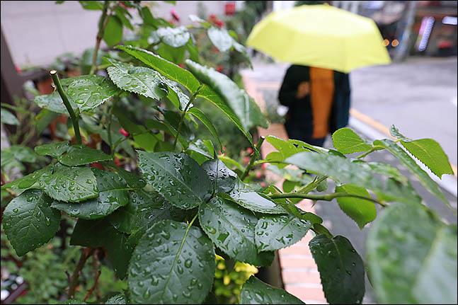 [내일날씨] 중부지방 비 갠 뒤 맑은 날씨…씻긴 하늘에 미세먼지 좋음