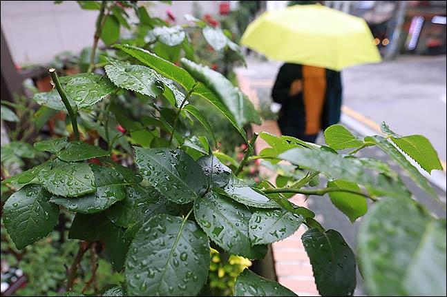 [오늘 날씨] '하지' 충청·남부 비…수도권 한여름 더위