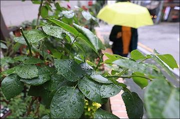 [내일날씨] 전국 흐리고 구름 많아…아침까지 중부 장맛비