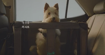 '車 속으로 들어온 犬'…현대차 반려견 마케팅