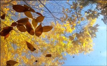 가을철 늘어나는 계절성 우울증 예방하려면