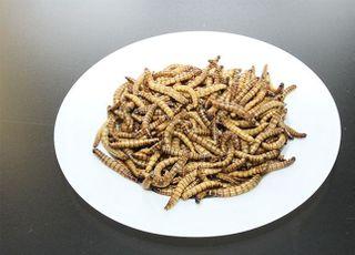 식용곤충 '아메리카왕거저리 유충'…새로운 식품원료로 인정