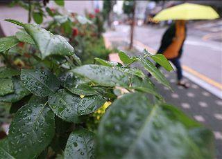 [내일날씨] 전국 맑다가 오후부터 차차 흐려져 비