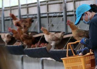 닭·오리, 입식 전 사전신고제 28일부터 시행