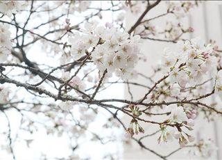 [오늘날씨] 포근한 날씨…중부지방 오후부터 봄비