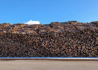 산림청, 국산 목재 올해 500만㎥ 공급…작년보다 40㎥↑