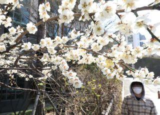 [내일날씨] 식목일 아침 반짝 꽃샘추위…대기 건조 '계속'
