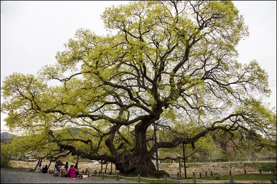 무등산 옛길 3코스 커다란 나무 밑에서 여행객들이 쉬고 있다. ⓒ 정은주