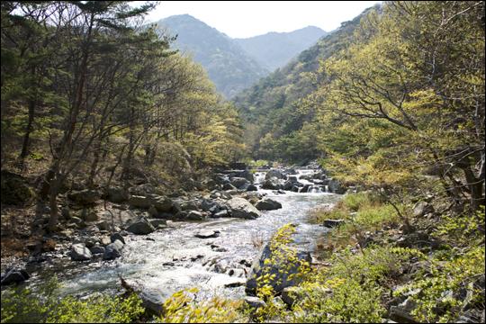 봄빛으로 물든 내연산 계곡 ⓒ 최갑수