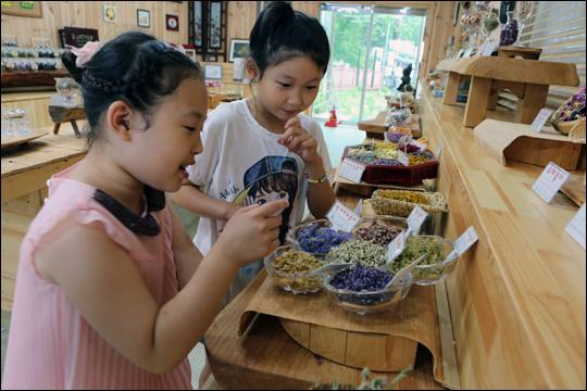 가야산야생화식물원 꽃차시음장 ⓒ 한은희
