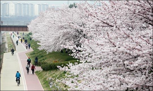 8일 한국도로공사에 따르면 오는 주말(9일, 10일)동안 전국 고속도로는 봄꽃축제 행락 차량으로 평소보다 더욱 혼잡할 것으로 보인다. (자료사진) ⓒ데일리안 홍효식 기자
