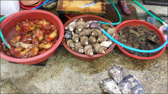 소매물도 선착장에서 해녀들이 판매하는 명게, 해삼, 소라 등 해산물.ⓒ조남대