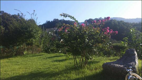양평농원 잔디밭에 백일홍이 붉게 피어 있는 풍경.ⓒ조남대
