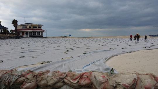 강한 바람으로 모래가 날려가는 것을 방지하기 위해 협재해변 해안가 모래사장을 덮어놓은 모습.ⓒ조남대