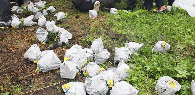 9일 오전 경기도 안성시 한 농가에 지난 주말 한반도를 강타한 제13호 태풍 '링링'으로 인해 낙과가 바닥에 쌓여 있다. ⓒ연합뉴스