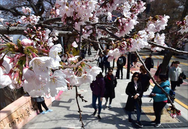 매년 시민들의 발길을 사로잡았던 여의도 봄꽃축제가 올해는 열리지 않는다. ⓒ 데일리안 홍금표 기자