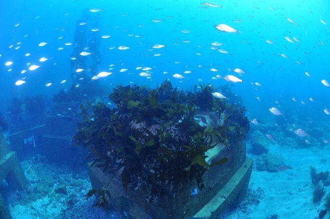 해조류와 어장이 형성된 포스코 트리톤. ⓒ포스코