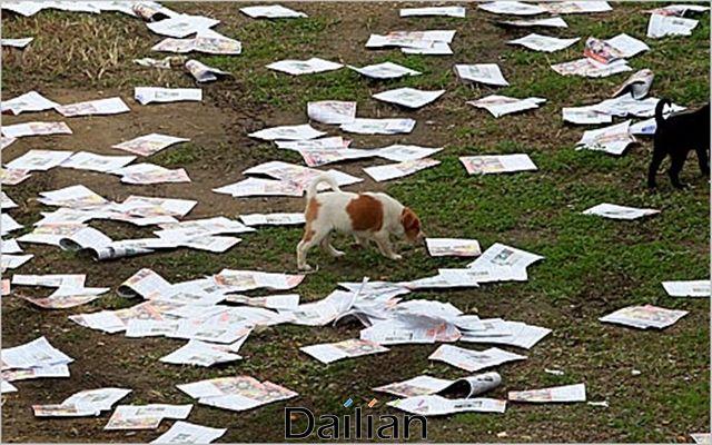 대북전단이 흩뿌려져 있는 경기도 파주 임진각 인근 거리를 강아지들이 지나고 있다(자료사진). ⓒ데일리안 박항구 기자