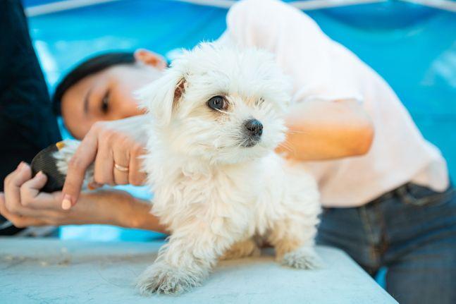 반려동물 페스티벌에서 한 반려견이 미용 서비스를 받고 있다. ⓒ뉴시스