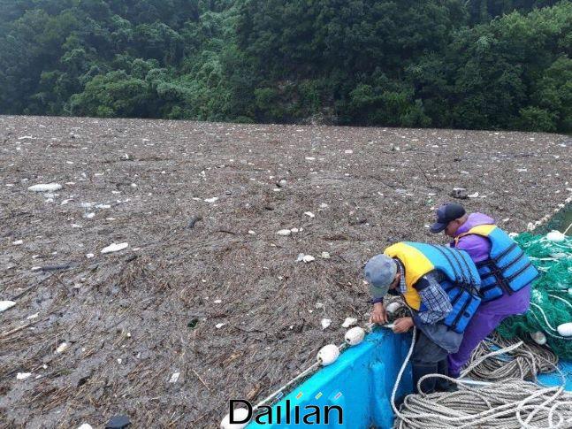환경부와 지자체가 지난 14일 집중호우로 대청댐에 유입된 부유쓰레기 수거 작업을 하고 있다. ⓒ환경부
