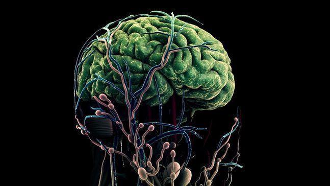 인간의 뇌를 형상화한 그래픽 ⓒ 삼성전자