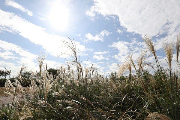 17일인 오늘 전국이 맑고 선선한 날씨를 보이겠다. ⓒ데일리안 류영주 기자