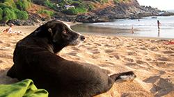 남인도 고카르나 해변으로 가야 하는 7가지 이유
